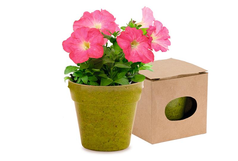 copertina Vaso Advert biodegradabile verde